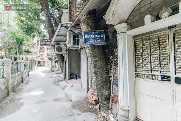 Kỳ lạ cây xanh mọc xuyên những căn nhà trong khu tập thể 60 năm tuổi ở Hà Nội - Ảnh 8.