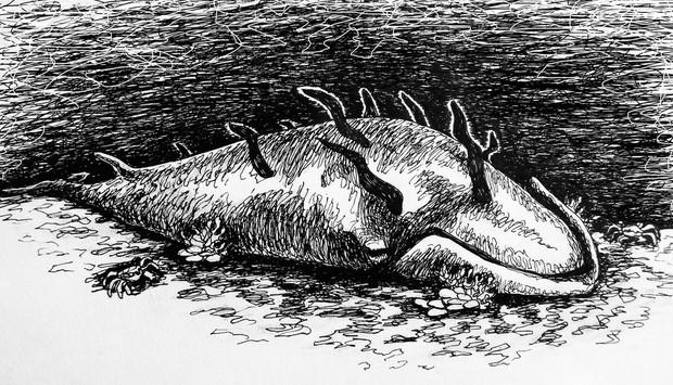 Chuyện ngày cuối đời của một con cá voi: Cái chết đau đớn tột cùng không thể tránh khỏi, nhưng lại là khởi đầu cho tương lai tốt đẹp hơn - Ảnh 6.