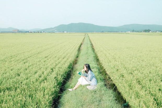 Loạt trải nghiệm mùa hè đỉnh như anime Nhật Bản: Bắt bọ cánh cứng, ngắm đom đóm trong rừng và ăn kem cho đến khi nào nổ não thì thôi! - Ảnh 3.