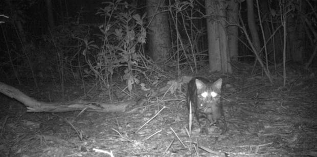Chỉ một con mèo thiến đơn độc cũng có thể thảm sát toàn bộ hệ sinh thái - Ảnh 5.