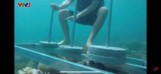 Cựu Quán quân Cuộc đua kỳ thú bức xúc khi ê-kíp phá hoại môi trường, đặt bê tông lên rạn san hô sống - Ảnh 3.