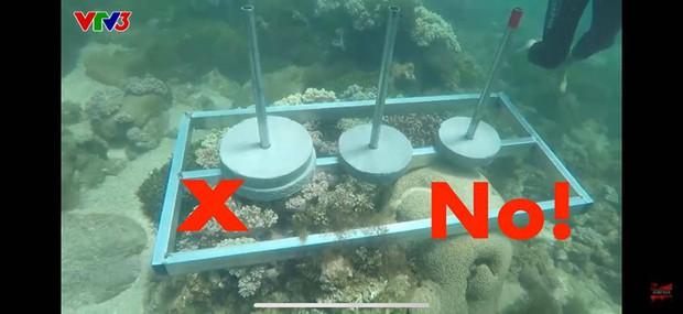 Cựu Quán quân Cuộc đua kỳ thú bức xúc khi ê-kíp phá hoại môi trường, đặt bê tông lên rạn san hô sống - Ảnh 2.
