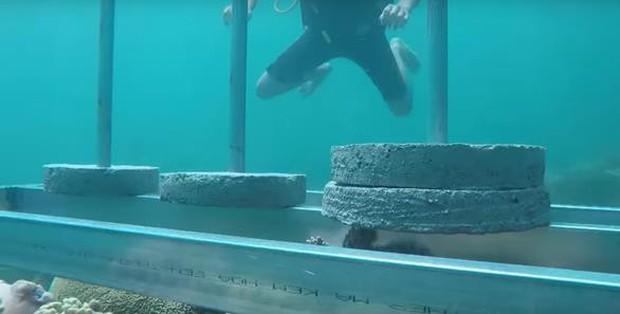 Cuộc đua kỳ thú gửi lời xin lỗi, giải thích lý do vì sao đặt bê tông lên rạn san hô - Ảnh 1.