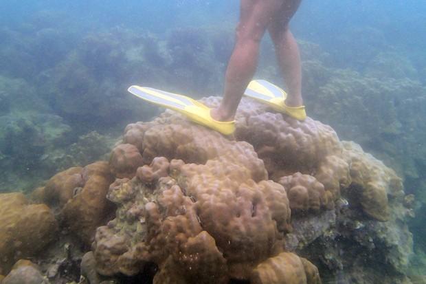 Chỉ đặt nhẹ thanh sắt cũng khiến san hô chết đi - Loài vật này liệu có dễ bị tổn thương đến thế? - Ảnh 4.