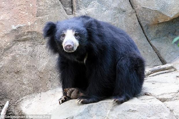 Bi kịch sư tử mẹ trong sở thú giết thịt con mình dứt ruột đẻ ra: Tại sao Hổ dữ không ăn thịt con mà sư tử lại làm như vậy? - Ảnh 2.