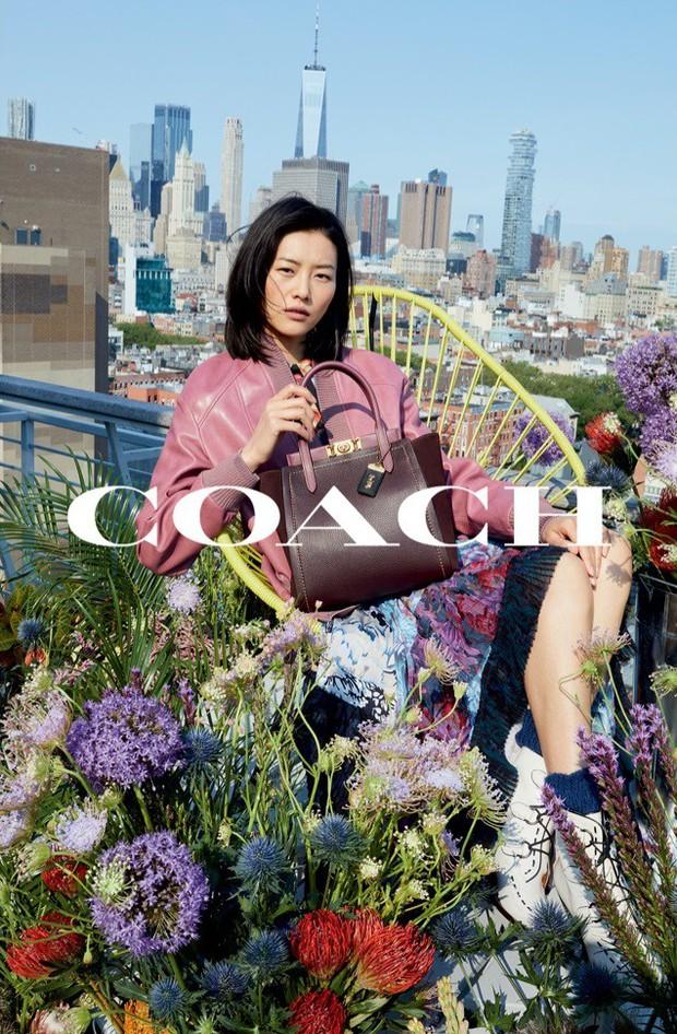Sau Versace, lại đến Coach dính phốt tại Trung Quốc: Liu Wen lo sốt vó, fan Quan Hiểu Đồng lại mừng húm - Ảnh 1.