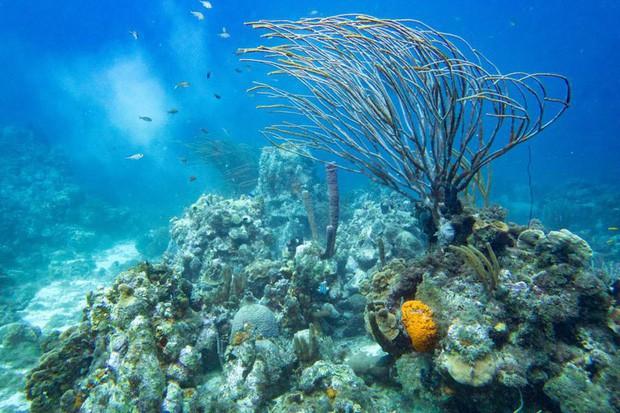 Tổ chức Sinh vật biển Việt Nam nói về việc đặt bê tông lên rạn san hô trong Cuộc đua kỳ thú và những quy tắc mà người lặn phải nhớ - Ảnh 3.