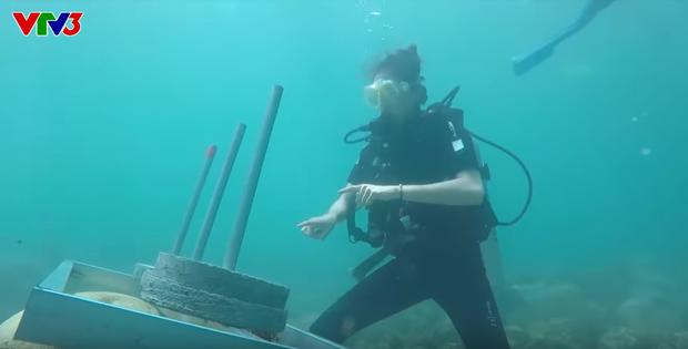 Tổ chức Sinh vật biển Việt Nam nói về việc đặt bê tông lên rạn san hô trong Cuộc đua kỳ thú và những quy tắc mà người lặn phải nhớ - Ảnh 6.