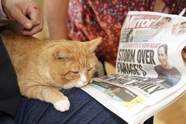 Cặp vợ chồng bỗng lên hương hóa triệu phú trong tích tắc chỉ vì quên mua thức ăn cho mèo cưng - Ảnh 2.