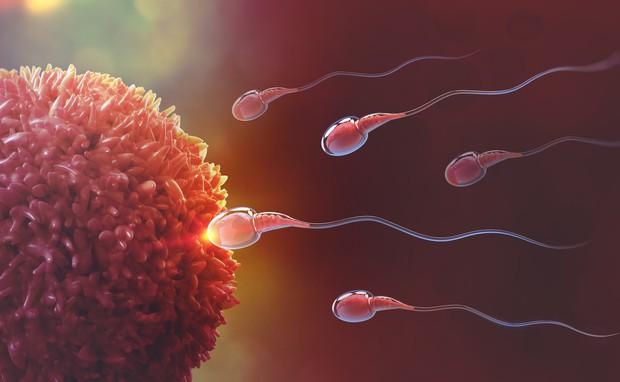 Ống dẫn trứng có hoạt động tốt hay không, cứ nhìn vào những biểu hiện này trên cơ thể sẽ rõ - Ảnh 1.