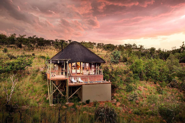 Dân mạng khóc thét với trải nghiệm tắm cùng voi trong bể bơi khách sạn 5 sao ở Nam Phi, mới nghe đã muốn chạy 8 hướng! - Ảnh 4.