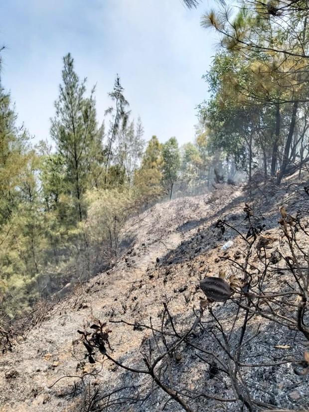 Cháy rừng ở Nghệ An nghi do dân đốt vàng mã Rằm tháng 7 - Ảnh 3.