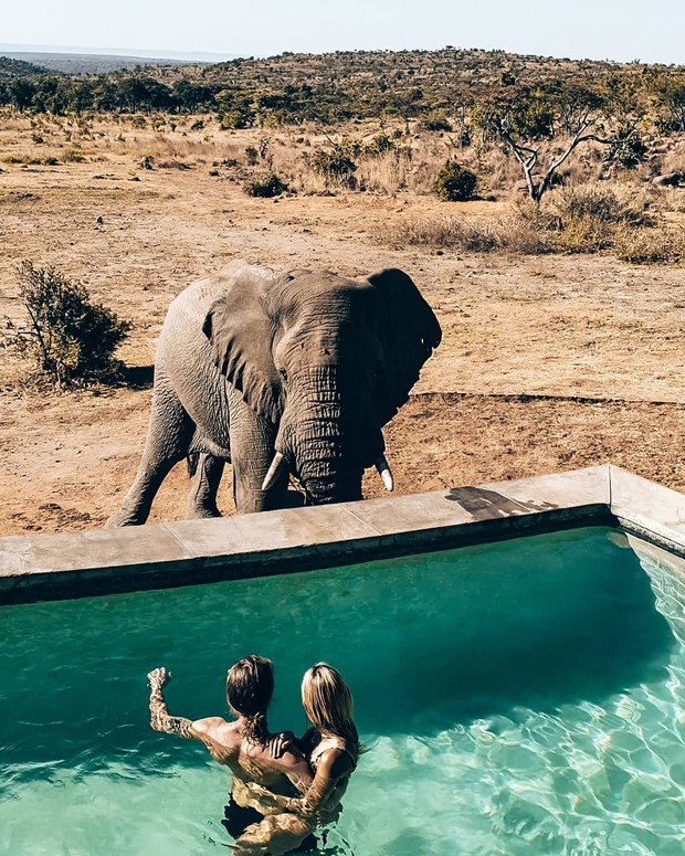Dân mạng khóc thét với trải nghiệm tắm cùng voi trong bể bơi khách sạn 5 sao ở Nam Phi, mới nghe đã muốn chạy 8 hướng! - Ảnh 6.