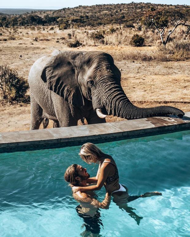 Dân mạng khóc thét với trải nghiệm tắm cùng voi trong bể bơi khách sạn 5 sao ở Nam Phi, mới nghe đã muốn chạy 8 hướng! - Ảnh 3.