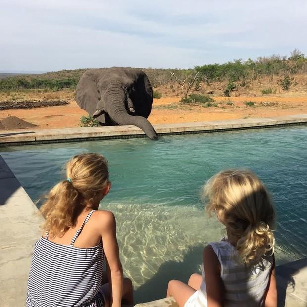 Dân mạng khóc thét với trải nghiệm tắm cùng voi trong bể bơi khách sạn 5 sao ở Nam Phi, mới nghe đã muốn chạy 8 hướng! - Ảnh 10.