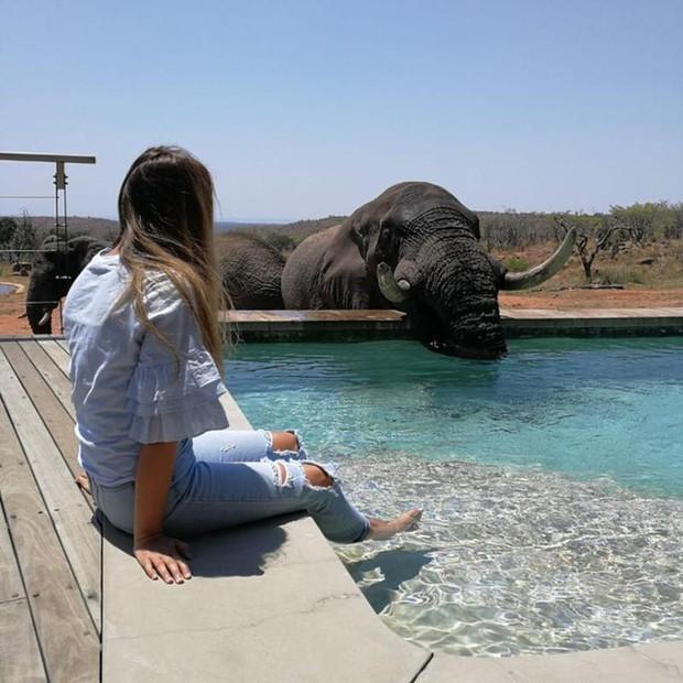 Dân mạng khóc thét với trải nghiệm tắm cùng voi trong bể bơi khách sạn 5 sao ở Nam Phi, mới nghe đã muốn chạy 8 hướng! - Ảnh 9.