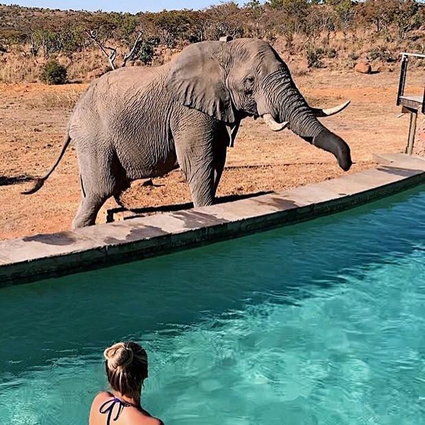 Dân mạng khóc thét với trải nghiệm tắm cùng voi trong bể bơi khách sạn 5 sao ở Nam Phi, mới nghe đã muốn chạy 8 hướng! - Ảnh 8.
