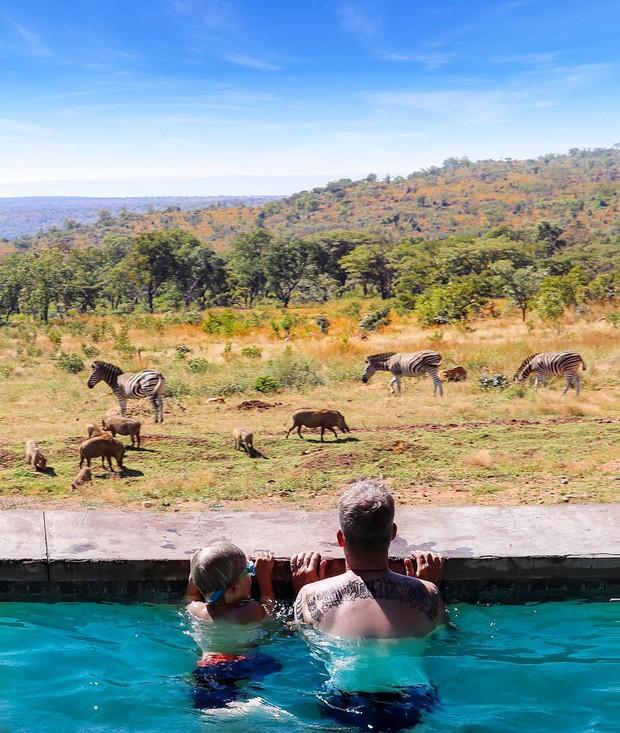 Dân mạng khóc thét với trải nghiệm tắm cùng voi trong bể bơi khách sạn 5 sao ở Nam Phi, mới nghe đã muốn chạy 8 hướng! - Ảnh 5.