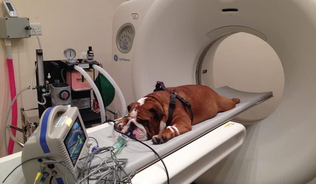 Khi bé Na và bạn bè đi chụp CT: Máu mặt như chúa sơn lâm hay nguy hiểm như báo cũng phải cúp đuôi ngoan ngoãn nghe lời bác sĩ - Ảnh 11.