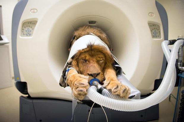 Khi bé Na và bạn bè đi chụp CT: Máu mặt như chúa sơn lâm hay nguy hiểm như báo cũng phải cúp đuôi ngoan ngoãn nghe lời bác sĩ - Ảnh 7.