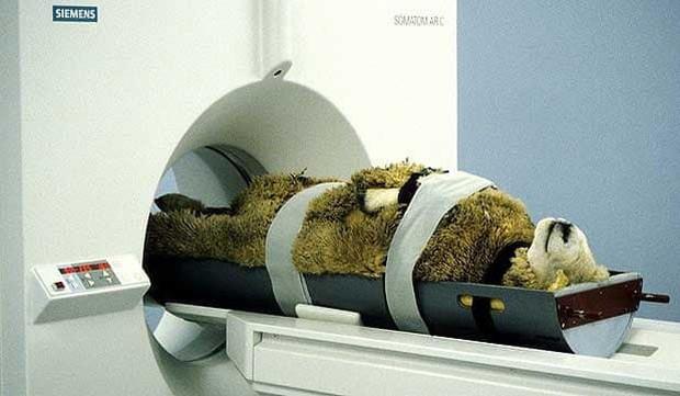 Khi bé Na và bạn bè đi chụp CT: Máu mặt như chúa sơn lâm hay nguy hiểm như báo cũng phải cúp đuôi ngoan ngoãn nghe lời bác sĩ - Ảnh 4.