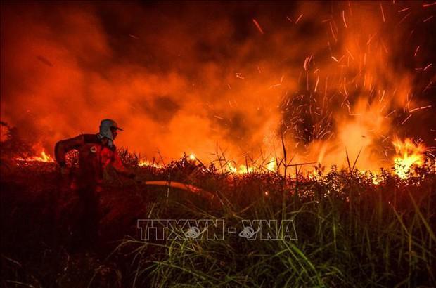 Cháy rừng trên diện rộng gây thiệt hại lớn tại Brazil - Ảnh 1.