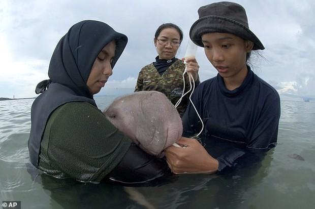 Dư luận phẫn nộ khi bò biển Marium được người dân Thái Lan yêu quý đã chết, trong ruột phát hiện toàn rác thải nhựa độc hại - Ảnh 1.