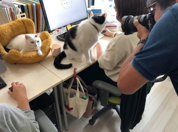 Chuyện lạ: Công ty công nghệ Nhật Bản trích hẳn một khoản bồi dưỡng tiền nuôi mèo cho nhân viên - Ảnh 1.