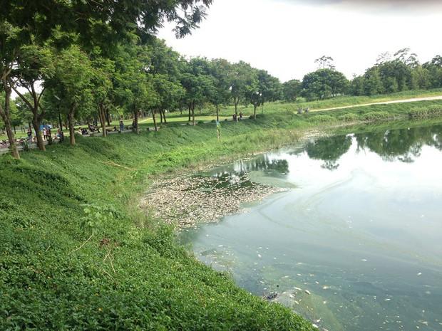 Hà Nội: Công viên Yên Sở bốc mùi nồng nặc do cá chết hàng loạt - Ảnh 1.