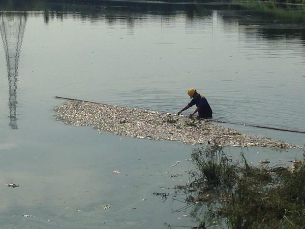 Hà Nội: Công viên Yên Sở bốc mùi nồng nặc do cá chết hàng loạt - Ảnh 3.