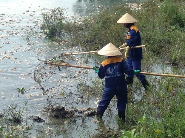 Hà Nội: Công viên Yên Sở bốc mùi nồng nặc do cá chết hàng loạt - Ảnh 4.