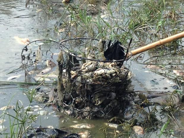 Hà Nội: Công viên Yên Sở bốc mùi nồng nặc do cá chết hàng loạt - Ảnh 5.
