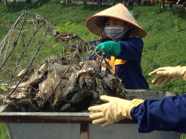 Hà Nội: Công viên Yên Sở bốc mùi nồng nặc do cá chết hàng loạt - Ảnh 6.