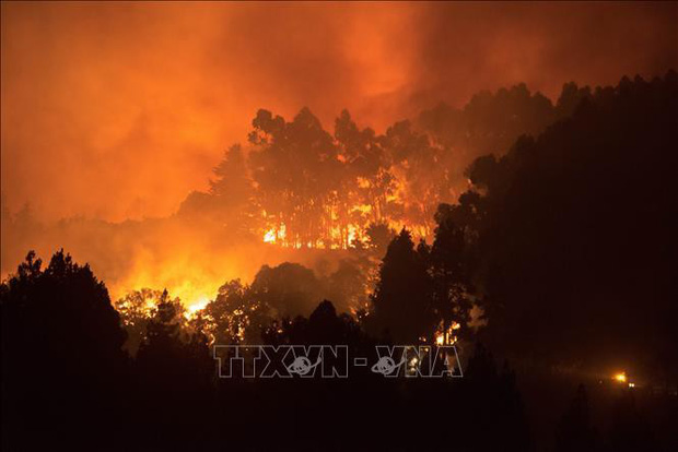 Tây Ban Nha sơ tán dân tại Gran Canaria do lại xảy ra cháy rừng - Ảnh 1.