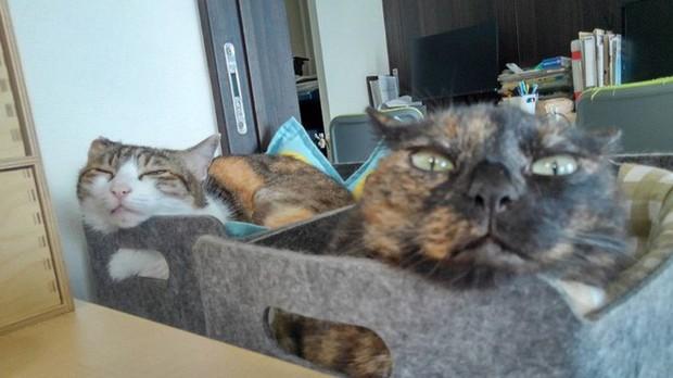 Chuyện lạ: Công ty công nghệ Nhật Bản trích hẳn một khoản bồi dưỡng tiền nuôi mèo cho nhân viên - Ảnh 2.