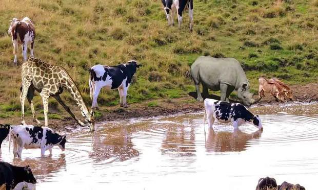 Uống nước nơi ao, hồ bẩn mà không ốm: tạo hóa đã làm gì để động vật hoang dã có khả năng này? - Ảnh 1.