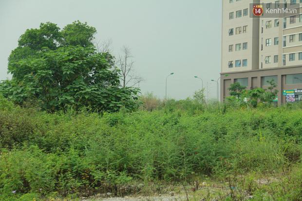 """Rắn bủa vây một chung cư ở Hà Nội, khu vui chơi bị """"bỏ hoang"""" vì người dân sợ rắn tấn công - Ảnh 5."""