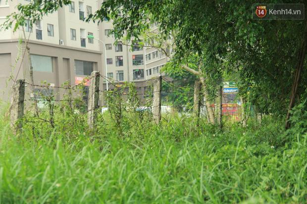 """Rắn bủa vây một chung cư ở Hà Nội, khu vui chơi bị """"bỏ hoang"""" vì người dân sợ rắn tấn công - Ảnh 6."""