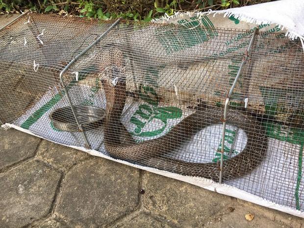 """Rắn bủa vây một chung cư ở Hà Nội, khu vui chơi bị """"bỏ hoang"""" vì người dân sợ rắn tấn công - Ảnh 12."""
