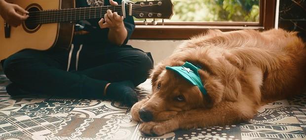 Mặc chủ đàn hát chó cưng bên cạnh cứ ngủ an yên, chàng trai hát cover thân thế bí ẩn này đang làm dân tình sôi sục tìm info! - Ảnh 5.