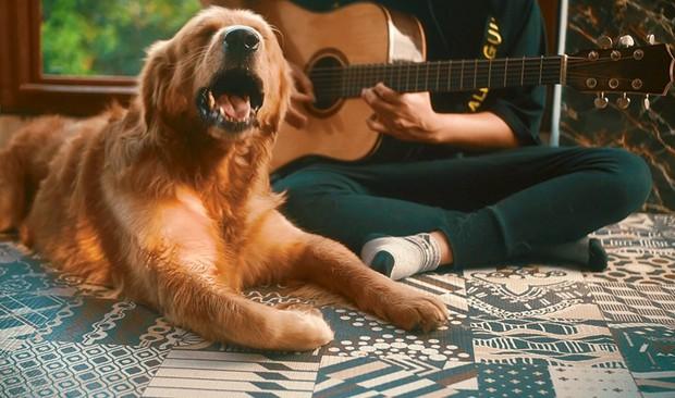 Mặc chủ đàn hát chó cưng bên cạnh cứ ngủ an yên, chàng trai hát cover thân thế bí ẩn này đang làm dân tình sôi sục tìm info! - Ảnh 6.