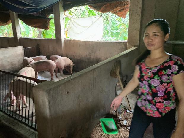 Kỳ tích: Lần đầu tiên đàn heo nhiễm dịch tả lợn Châu Phi sắp bị tiêu hủy, bất ngờ hết bệnh nhờ... ăn bã rượu - Ảnh 1.