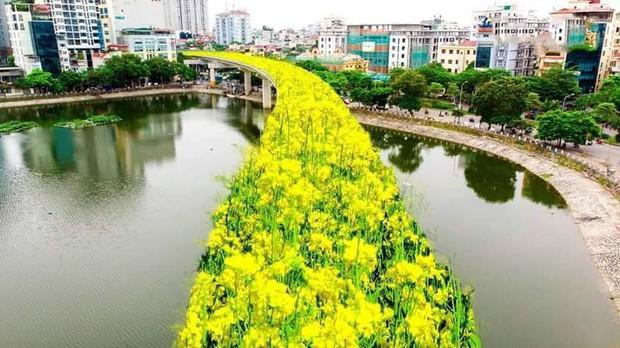 Đường sắt Cát Linh - Hà Đông bỗng hóa hoa vàng trên cỏ xanh qua bàn tay photoshop, thêm loạt lựa chọn bất ngờ được dân mạng ủng hộ rào rào - Ảnh 2.
