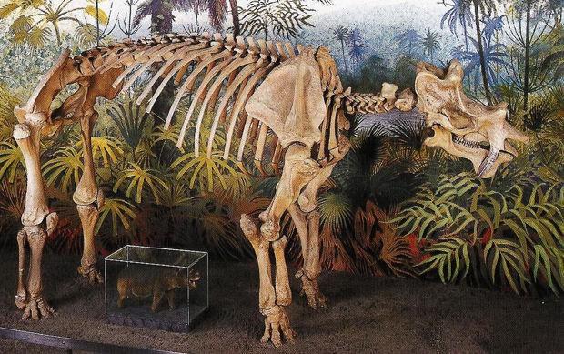 Có thể bạn chưa biết, tổ tiên của voi và tê giác cổ đại có vẻ ngoài quái dị hơn ngày nay nhiều! - Ảnh 7.