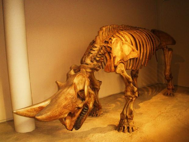 Có thể bạn chưa biết, tổ tiên của voi và tê giác cổ đại có vẻ ngoài quái dị hơn ngày nay nhiều! - Ảnh 9.