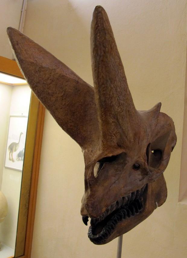 Có thể bạn chưa biết, tổ tiên của voi và tê giác cổ đại có vẻ ngoài quái dị hơn ngày nay nhiều! - Ảnh 10.
