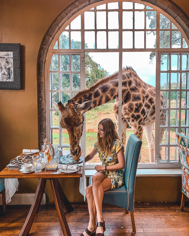 """Khách sạn nổi tiếng nhất châu Phi vì cho du khách ăn sáng cùng hươu cao cổ: Dễ thương thật, nhưng cái giá thì """"chát"""" quá! - Ảnh 16."""