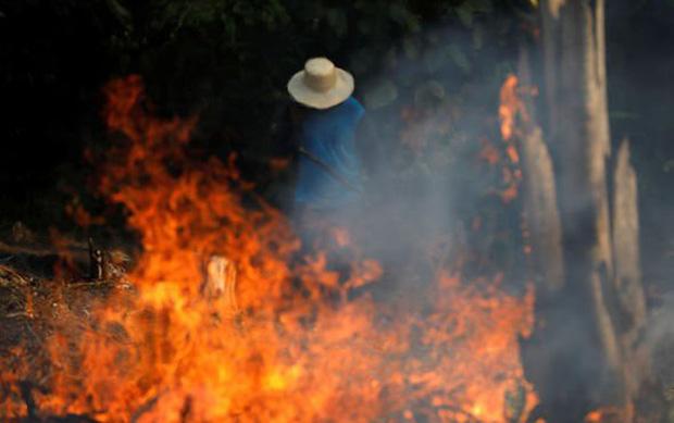 Sự thật về loạt hình thú rừng chết cháy ở Amazon gây ám ảnh: Hỏa hoạn và những cái chết là thật, nhưng không liên quan đến nhau! - Ảnh 1.