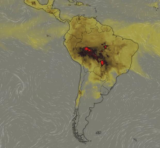 Sự thật về loạt hình thú rừng chết cháy ở Amazon gây ám ảnh: Hỏa hoạn và những cái chết là thật, nhưng không liên quan đến nhau! - Ảnh 2.