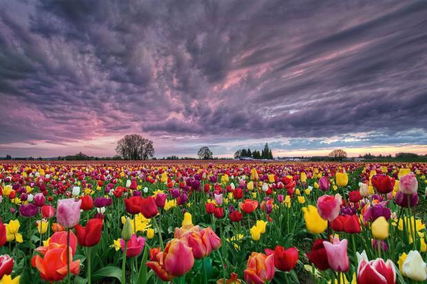 Quốc gia này có diện tích chỉ bằng 1/8 Việt Nam nhưng lại chi phối ngành hoa 100 tỷ USD thế giới: Đầu tư công nghệ, giao dịch hoa như cổ phiếu - Ảnh 14.